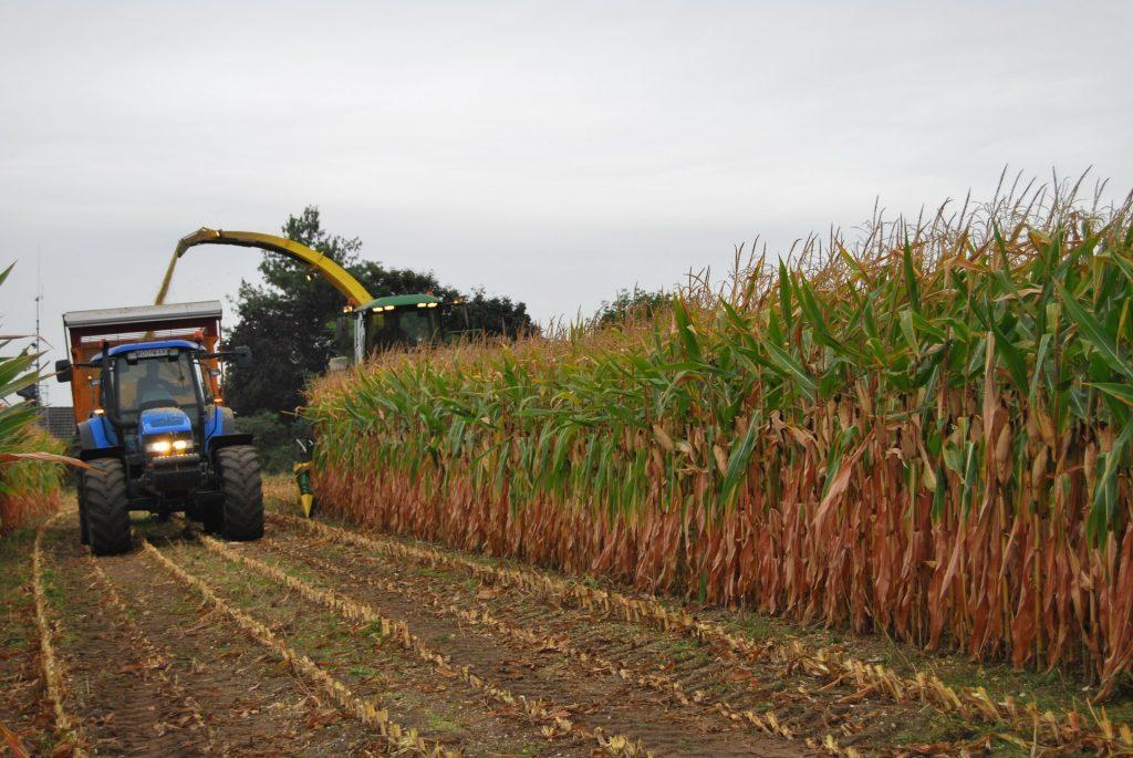Mais oogst 2012 maishakselen