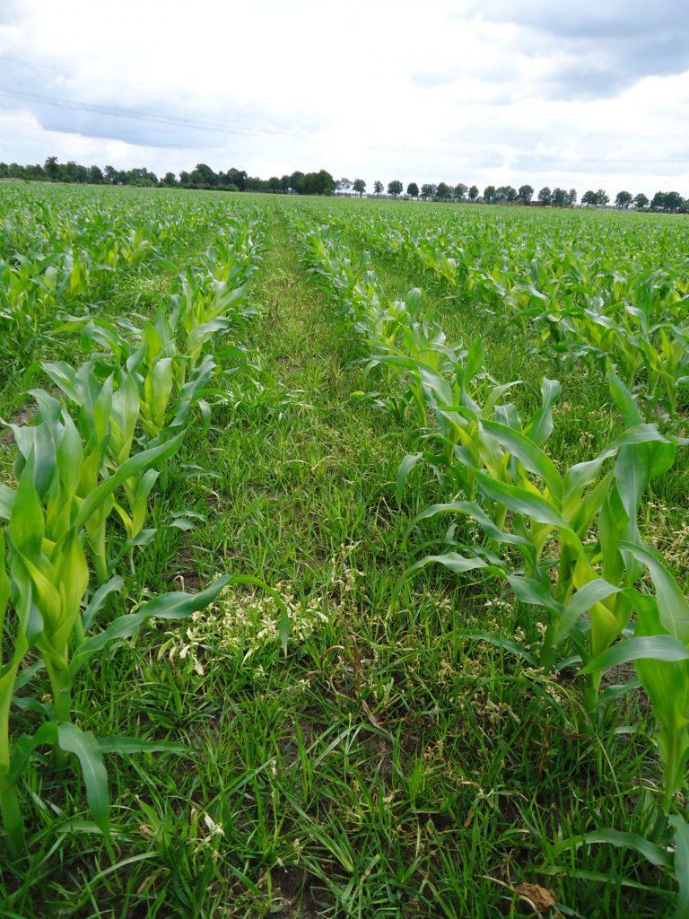 Proterra Maize update week 26